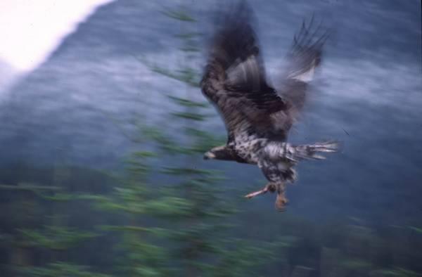 Ashcroft's Eagle?